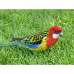 Jigsaw image - Parrot