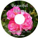 Beautiful Blooms DVD