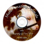 More Amazing Animals DVD