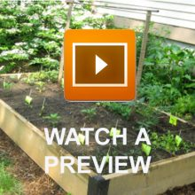 Vegetable patch video preview