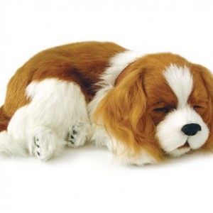 Cavalier King Charles puppy breathing pet