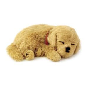 Golden Retriever breathing puppy