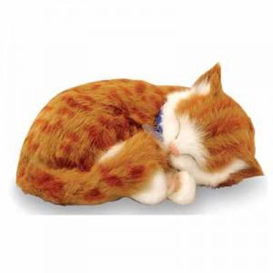 Orange Tabby breathing kitten