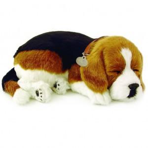 Beagle breathing puppy