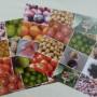 Fruit picture bingo