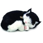 Sensory Pet - black and white shorthair kitten