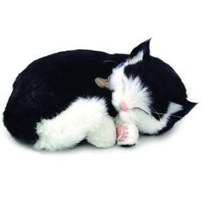 Sensory Pet - black and white shorthair kitten