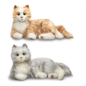 companioncats1