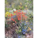 Jigsaw Puzzle - Wildflowers 2