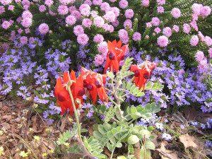 Jigsaw Puzzle - Wildflowers1