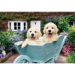 puppies in a wheelbarrowa