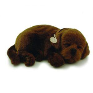 Sensory pet - Chocolate Labrador that breathes